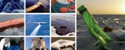 10 metodologie all'avanguardia per contenere l'inquinamento dei mari